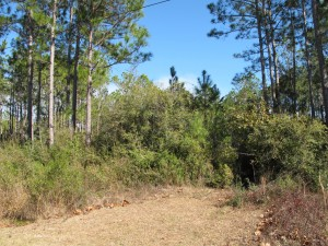 Santa Rosa Beach lots for sale