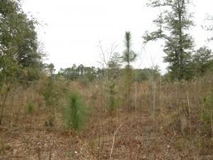 Defuniak Springs acreage