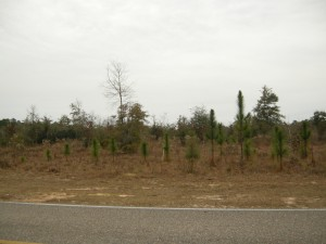 Defuniak Springs acres