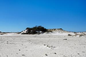 Navarre Beach dunes